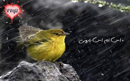 باران,پیامک باران,اس ام اس روز بارانی,اسمس باران,اسمس پاییزی,پیامک پاییزی,جملات عاشقانه روز های بارانی,روز های بارانی,متن های زیبای بارانی,روز بارانی عاشقانه,
